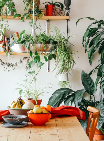 Welcome to the jungle, czyli miejska dżungla w naszym domu