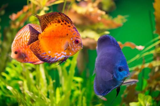 Niesamowita ozdoba wnętrz – jak urządzić piękne akwarium?