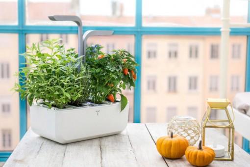 Oryginalne dekoracje zamienią twoje mieszkanie w prawdziwy ogród