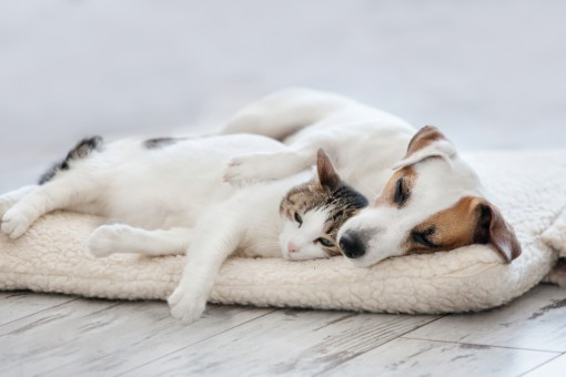 Luksusowe meble dla zwierząt. Jak producenci rozpieszczają naszych pupili?