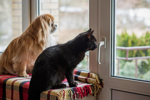 Drzwi z wejściem dla kota lub psa