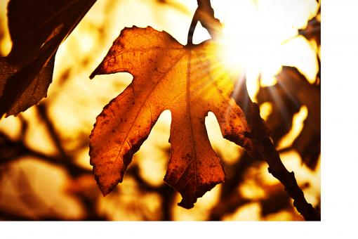 Barwy jesieni - jak zmienić kolory w mieszkaniu?