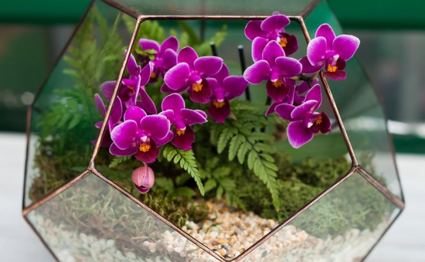Miniaturowy Ogród W Szkle Jak Samodzielnie I Niebanalnie Go