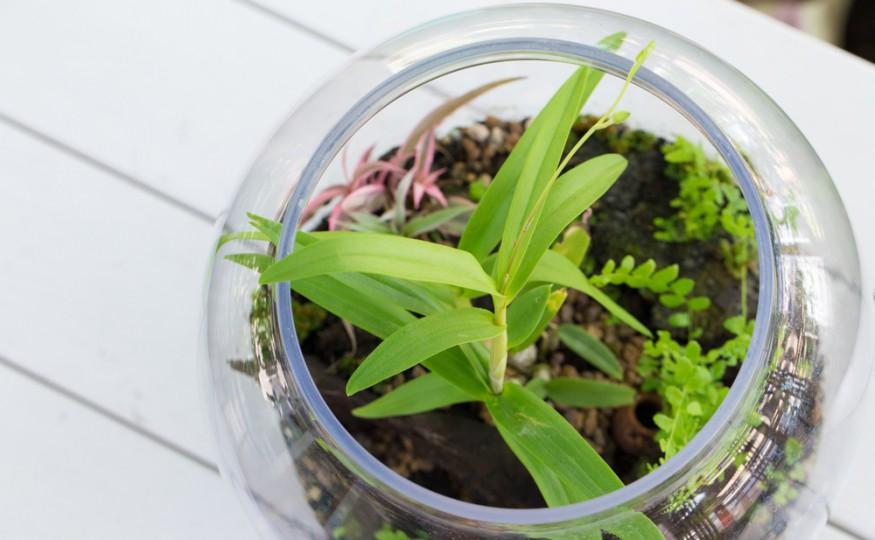 Jak sadzić rośliny w słoju?