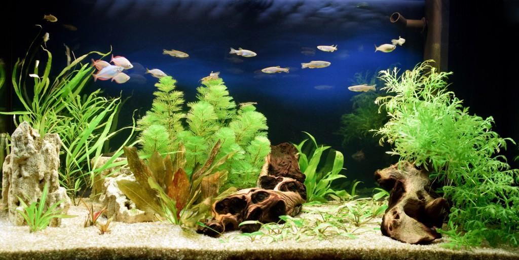 Niesamowita Ozdoba Wnętrz Jak Urządzić Piękne Akwarium