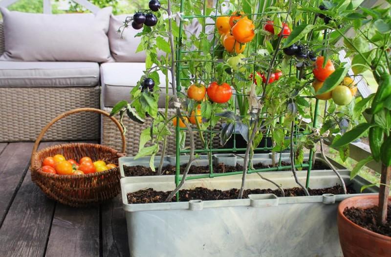 warzywa na tarasie
