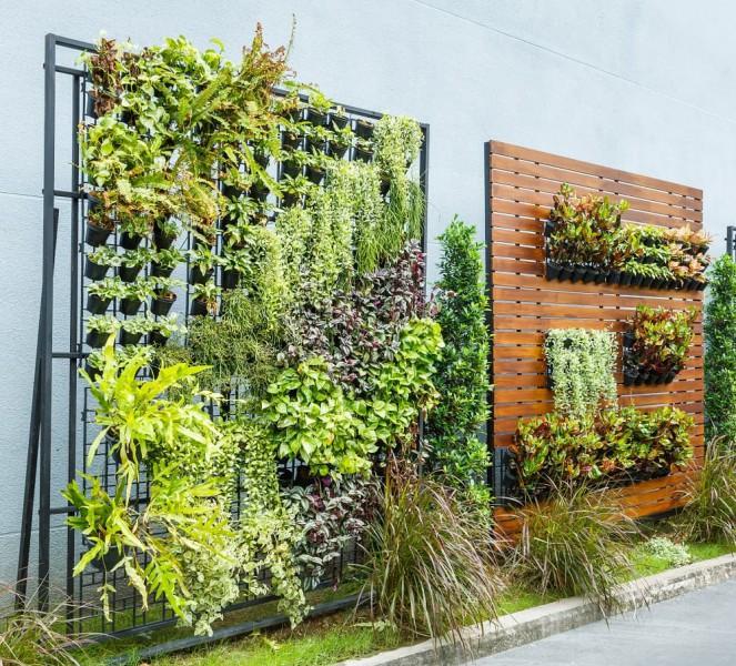 ogród wertykalny na balkonie