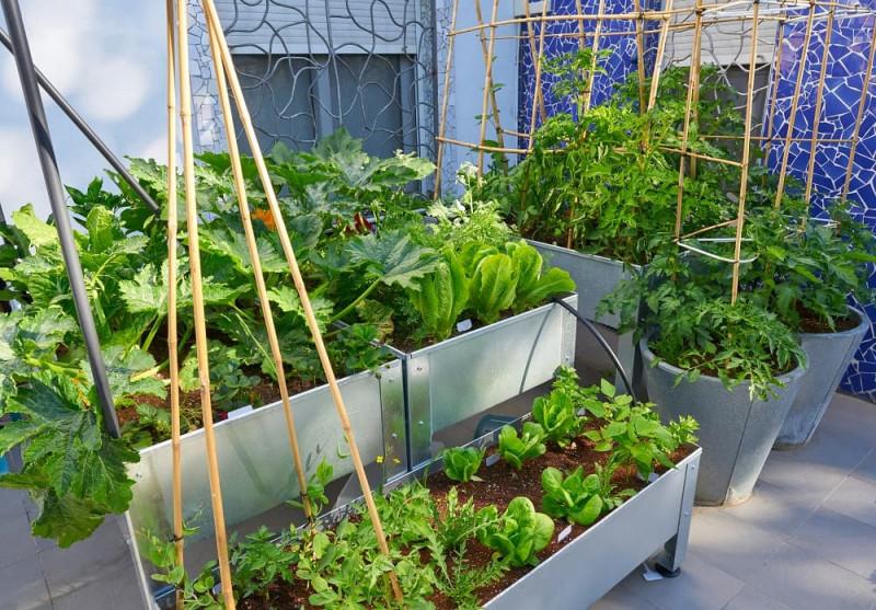 zioła i warzywa na balkonie
